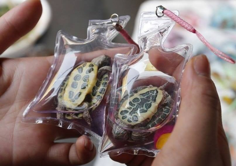 Live animals sealed in plastic and sold as keychains in China